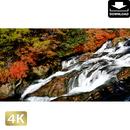 2014013 ■ 日光 竜頭の滝 紅葉