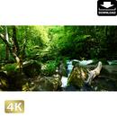 2035060 ■ 奥入瀬渓流 阿修羅の流れ