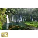 1011013 ■ 静岡 白糸の滝
