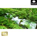 2035063 ■ 奥入瀬渓流
