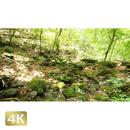 1037020 ■ 御岳山 ロックガーデン