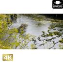 2033051 ■ 柿田川