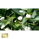 1024002 ■ 花畑 小花
