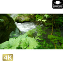 2035088 ■ 奥入瀬渓流 渓流