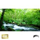 1035025 ■ 奥入瀬渓流 三乱の流れ