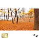 1016005 ■ 山中湖 紅葉