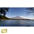 1015023 ■ 富士山 紅葉