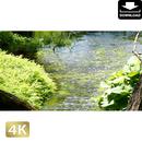 2033015 ■ 柿田川