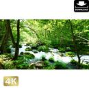 2035043 ■ 奥入瀬渓流 石ヶ戸の瀬