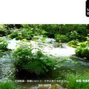 2035046 ■ 奥入瀬渓流 石ヶ戸の瀬