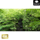 2035042 ■ 奥入瀬渓流 白髪の滝