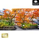 2043068 ■ 京都 祇園白川