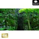 2035079 ■ 奥入瀬渓流 岩