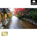 2043092 ■ 京都 祇園白川