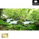 2035033 ■ 奥入瀬渓流 石ヶ戸の瀬