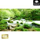 2035068 ■ 奥入瀬渓流 石ヶ戸の瀬