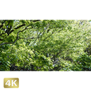 1033031 ■ 柿田川 清流