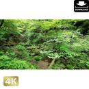 2037006 ■ 御岳山 ロックガーデン