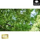 2034006 ■ 渡良瀬遊水池 樹木