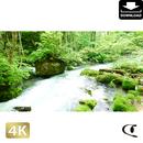 2035066 ■ 奥入瀬渓流