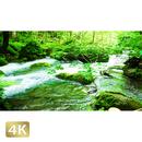 1035096 ■ 奥入瀬渓流 渓流