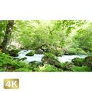 1035034 ■ 奥入瀬渓流 石ヶ戸の瀬