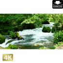 2035029 ■ 奥入瀬渓流 阿修羅の流れ