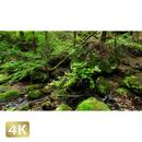 1037040 ■ 御岳山 ロックガーデン