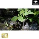 2033048 ■ 柿田川
