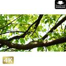 2034009 ■ 渡良瀬遊水池 樹木