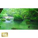 1035078 ■ 奥入瀬渓流 清流