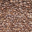 自家焙煎コーヒー豆 インド トリシューラSC-011  100g