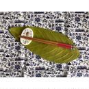 ☆Handmade☆【香港・Studio COCORO】菠蘿油&蛋撻柄の箸置き /  HK-Porcelarts-911