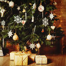 オレゴン産モミの木Oregon Abies Firma / 180∼210cm(6~7feet)【23区限定商品】