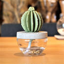 CACTUS Fragrance diffuser -WHITE FLOWER-