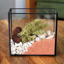 URBAN GREEN MAKERS TERRARIUM KIT #4