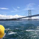 New!ビデオ通話で楽しむ*高速観潮船から観る~鳴門の渦潮』