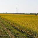 北海道産無洗米ゆめぴりか10キロ(平成24年度新米)