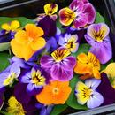 エディブルフラワー 彩り生花 〈20輪〉