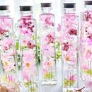 桜咲くうららかな春のハーバリウム -Lサイズ-