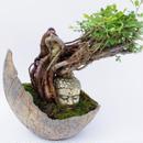 【仏像盆栽】ムレスズメ