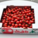 【2〜3箱ご注文はこちら!】トマトベリー(約3kg)