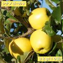【送料無料】「シナノゴールド」3kg(約10玉)【青森県産りんご:家庭用】