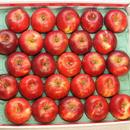 【送料無料】「紅玉」5kg(23~25玉)【青森県産りんご】【家庭用】