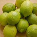 【再販開始!】リスボンレモン(青レモン) 10kg
