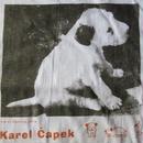 90's日本製 カレル チャペック ダーシェンカ 子犬 フォトTシャツ