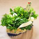 春のお祝いギフトにおすすめ♡野菜ブーケ