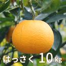 森果樹園のはっさく10kg【2/19発送開始】