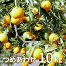 森果樹園の柑橘3種セット10kg【2/19発送開始】
