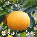 森果樹園のはっさく5kg